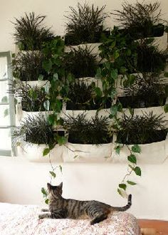 Wally Pockets - Sensational modular planting idea