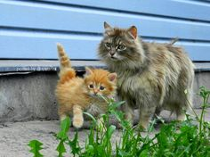 Adorable Curious Family   ツ