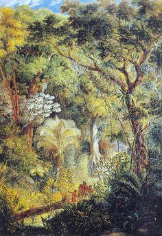 """ Árvore Gigantesca na Selva Tropical Brasileira"".  (1830). (by Johann Moritz RUGENDAS)."