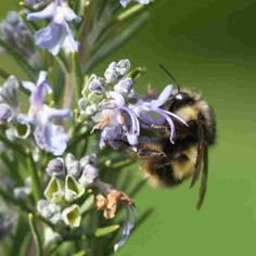 Bees Added To U.S. Endangered Species List For 1st Time  October 3, 20161:58 PM ETReport: More Pollinator Species In Jeopardy, Threatening World Food Supply