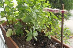 DIY Plant Marker: Clothespins