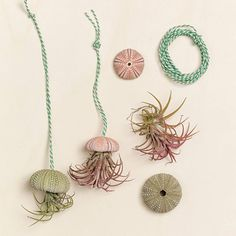 yasmin chopin   Join the green revolution #coral #turquoise air plants and shells Green Revolution, Winter 2014 2015, The Blushed Nudes, 2015 Trends, Coral Turquoise, Air Plants, Tassel Necklace, Shells, Fall Winter