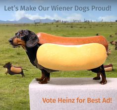 Watching the BIG GAME? Let's make dachshund proud - Vote for the Heinz wiener dog commercial as the best, because doxies deserve the #1 spot: http://admeter.usatoday.com/