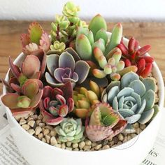 Office-Desktops-Potted-plants-Flowers-Succulents-Radiation-protection-Plant-Seed
