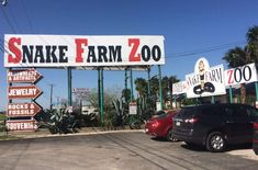 Here are 10 things you may not know about the Snake Farm on I-35 ibetween San Antonio and New Braunfels, TX