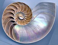 Teaching Math | Nature Math