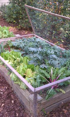 "a follower requested i pin my ""salad box"" from my own garden at willow. i surround my seasonal greens in a chicken-wire cage, complete with a top lid, to keep out all the furry creatures who like to eat them as much as me!"