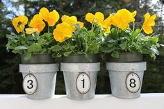 House number - pots