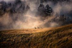 Marin County, California Photography By: Larry Nienkark