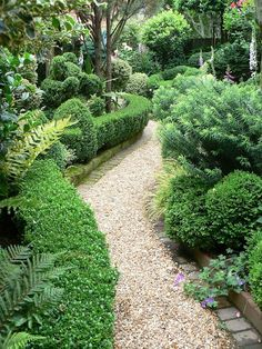 Love the curvy boxwood hedge and the textural contrasts.