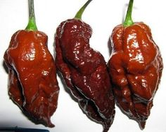 Amazon.com: Chocolate Bhut Jolokia Chile Pepper 10 Seed - Extreme Hot - Ghost Pepper: Patio, Lawn & Garden
