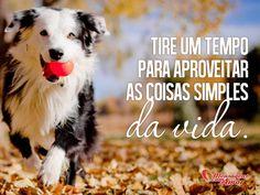 Tire um tempo para aproveitar as coisas simples da vida. #tempo #aproveitar #coisa #simples #vida