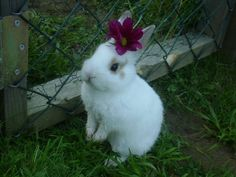Bunny has a flower in her hair
