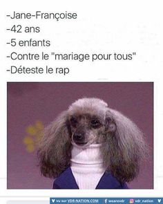 French Funny Pictures (By cons people who s) =) Informations About Images Droles Francais (Par contr Funny Animal Photos, Animal Memes, Funny Photos, Funny Animals, Animals Photos, Rage Comic, Funny Memes, Jokes, Funny Love