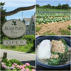 Beach Plum Farm is located in Cape May, NJ and a true gem.  It's off the beaten path and wonderful for exploring and enjoying delicious farm to table food!