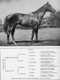 """Assault ~ """"The club footed Comet"""" 7th horse to win the Triple Crown. (1946)"""