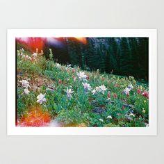 Colorado Wildflowers Art Print on Society6
