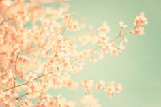 Fresh Flower Photography