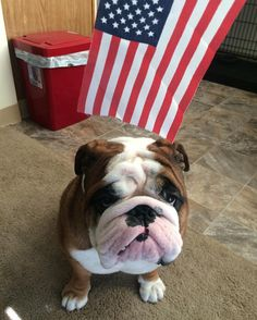 Turns out that Bub is a very patriotic immigrant !