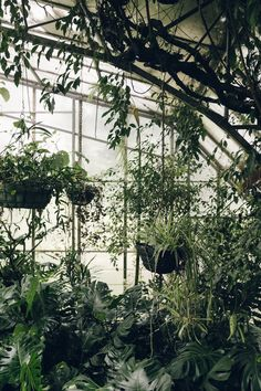 Roath Park Conservatory - Cardiff, South Wales — Haarkon - Lifestyle, Travel and Design Hanging Plants, Indoor Plants, Green Life, Cardiff, South Wales, Conservatory, Wall Sticker, Light In The Dark, Planting Flowers