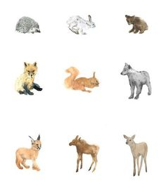 forest animals for children ( wolf, fox, lynx, deer, moose, hedgehog, hare, bear, squirrel) set of watercolor postcards, montessori cards