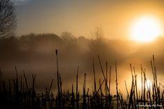 Morning fog/Morgennebel