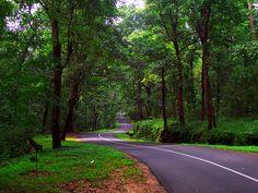 Valparai forest route