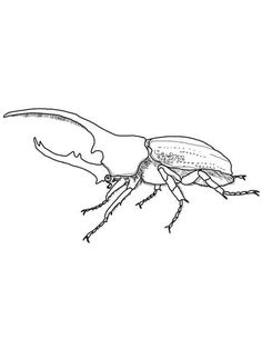 Rhino Beetle, Beetle Insect, Beetle Drawing, Beetle Tattoo, Art Drawings Sketches Simple, Line Drawing, Tattoo Inspiration, I Tattoo, Line Art