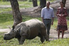 Poachers shot dead a rhinoceros at a wildlife park in northeast India hours after Britain's Prince William and his wife Kate visited the sanctuary, a wildlife official said Friday.  Rangers found the dead rhino with its horn missing on Thursday -- the day the royal couple left the Kaziranga National