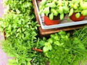 Ratios for Converting Fresh Herbs to Dried | Substituting Fresh Produce in Recipes