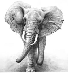 Elephant Pencil Drawing Tattoo Design