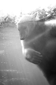 polar bear | i had a dream about one last night