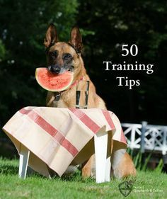 50 Training Tips From A Professional