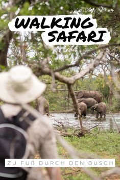 Noch näher in der Wildnis geht nicht! Ohne schützenden Wagen kann das Abenteuer Afrika so richtig beginnen. Zu Fuß durch den Busch zu Wandern ist eine intensive Naturerfahrung, die Sie weit weg von Ihrem Alltag und ganz nah an die kleinen und großen Wunder der Wildnis bringt. Erfahrene Guides werden Sie auf die Spuren der Wildtiere mitnehmen und in spannende Busch-Weisheiten einführen. #afrika #bushwalks #walingsafari #safari #eco #nachhaltig #naturschutz #conservation #ecotourism Safari, Walking, Africa Travel, Far Away, How To Introduce Yourself, How To Fall Asleep, Wilderness, Nature, Life