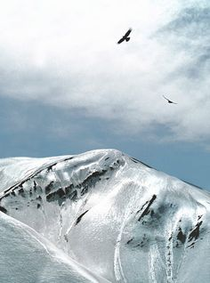 Eagles soar above the Alborz's Mountains of Iran, still covered in ice, although it's the beginning of April ~ Photo by...Daniel Nadler©
