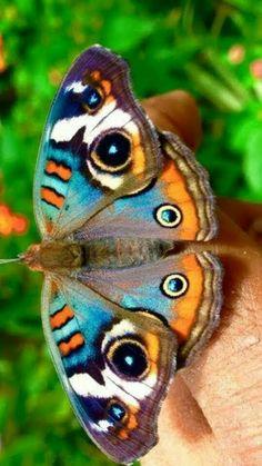 Beautiful Bugs, Beautiful Butterflies, Animals Beautiful, White Flower Pictures, Butterfly Pictures, Spirit Animal Totem, Animal Totems, Butterfly Crafts, Butterfly Art