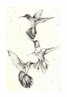 3 hummingbirds
