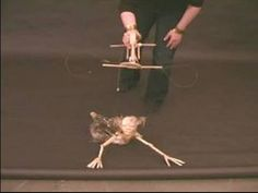 All About Marionettes : How to Move Marionettes