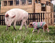 Somos amigas   no comida!  Laura y Matilda son dos cerditas rescatadas de la muerte. Laura iba a ser explotada como cerda reproductora en una granja industrial y Matilda iba a terminar destrozada en una olla en el campo. Si bien sus destinos eran distintos su vida iba a terminar por una misma razón: el consumo de carne de animales por parte de nosotros los humanos.  Sin embargo ambas bebés encontraron un hogar seguro donde viven sus vidas tranquilas libres y con los mejores cuidados. En el…