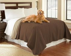 Mambe waterproof Furniture Covers are designed and sized for all your furniture protection needs, ideal for dogs, cats, spill-prone kids, or people with incontinence. Furniture Covers, Upholstered Furniture, Sofa Covers, Bed Furniture, Sofa King, King Beds, Good Sleep, Love Seat, King Queen