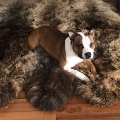 This is Morag Horner's adorable dog looking totally at home on the new fleece. Posing beautifully as well, don't you think? Thanks for sending in Morag! Cute Dogs, Fans, Funny Dogs