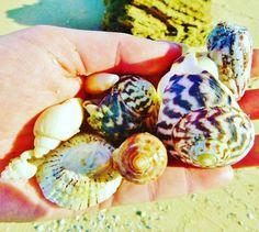 #seashells #beach #ocean #apollobay #bahia #seashore #vidadelmar #marazul #coastal #lifeofadventure #explorar #buenviaje #journey #endoftheroad by lapaisitalau http://ift.tt/1LQi8GE