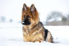 Hutch in the snow