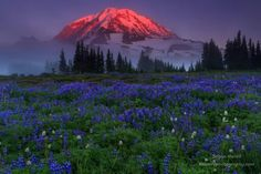 Sunset in Spray Park / Mount Rainier National Park, Washington. Captured by Bryan Moore Photography. Spray Park, Hawaiian Sunset, Mount Rainier National Park, Washington State, Nature Photos, The Great Outdoors, Beautiful Places, Waterfall, National Parks