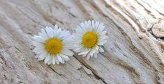 flowers-736543_960_720.jpg (960×494)