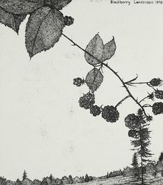 Art Hansen : Blackberry Landscape 1976 at Davidson Galleries