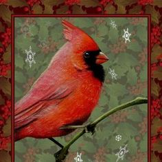 Set Of Four Cardinal Bird Art Holiday Cards by by MelodyLeaLamb, $12.00