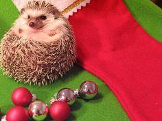 Merry XMAS! (Via http://www.wuestenigel.com/2011/12/21/frohe-weihnachten/)