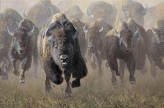 bison-stampede-wallpaper-4