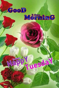 Good Morning Tuesday, Good Morning Happy, Good Morning Greetings, Happy Tuesday, Tuesday Greetings, Rose, Flowers, Allah, Pink